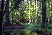 Parcul national Bialowieza (Polonia)