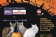 HalloWinner Cat Show!